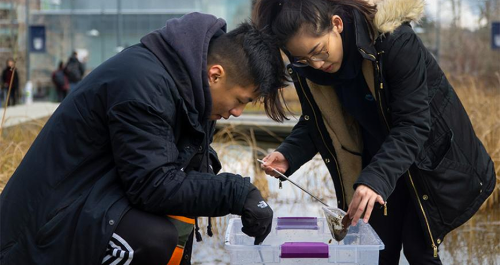 UBC students study invertebrates in the University Boulevard water feature
